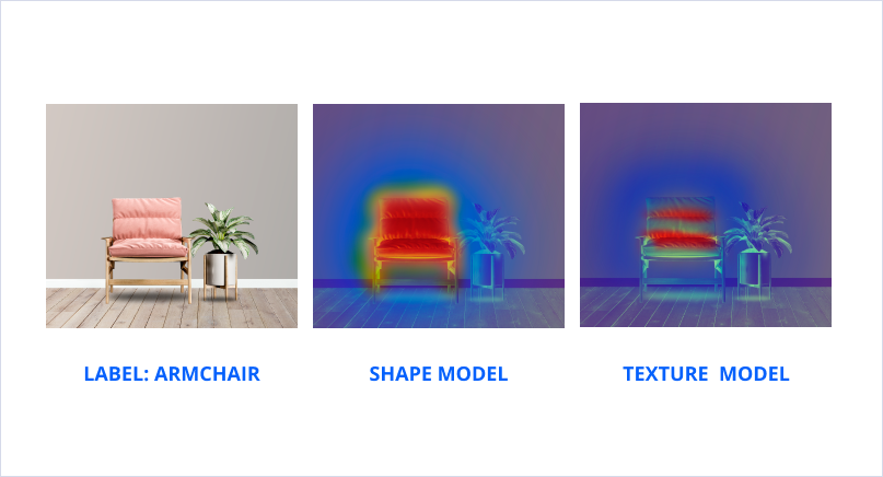 The attention of biased models is focused on different features