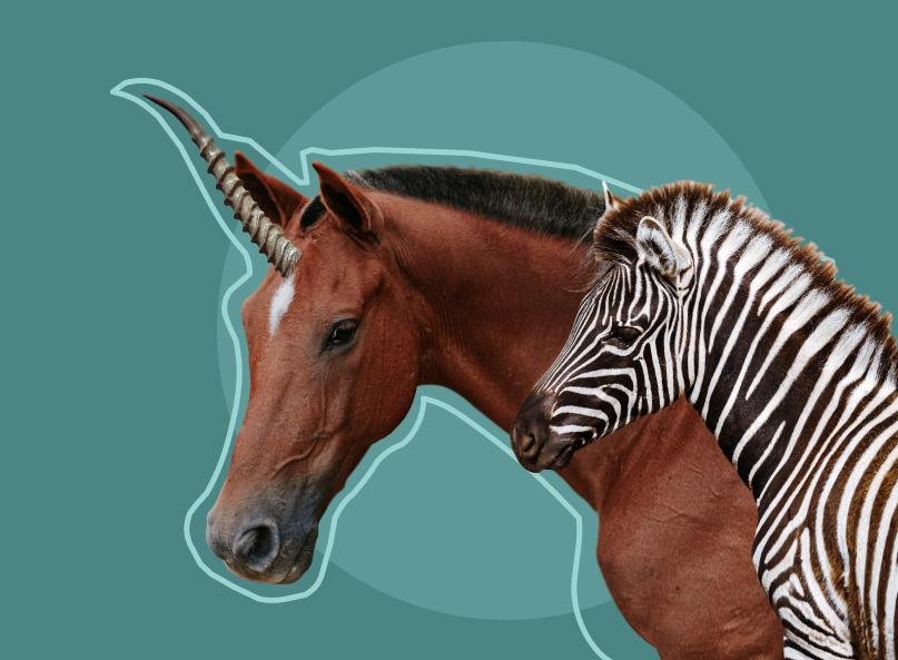 New players: Zebra