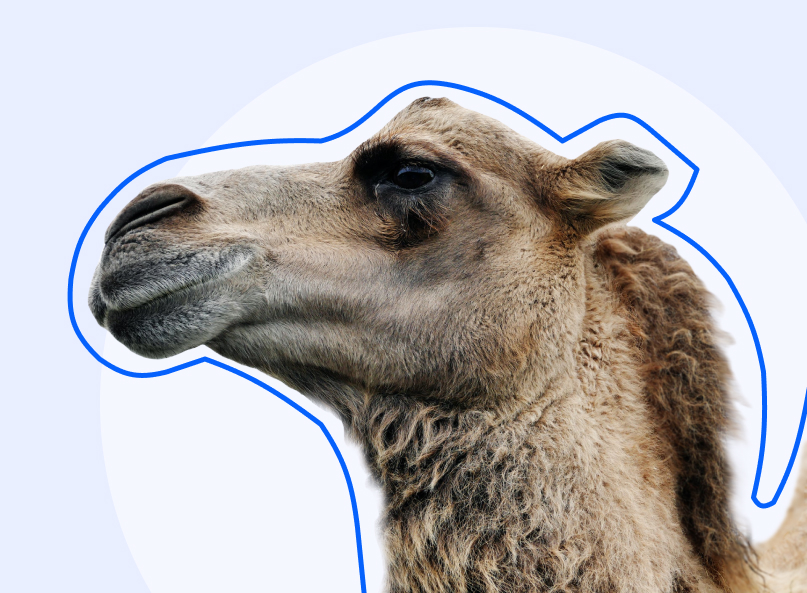 New players: Camel